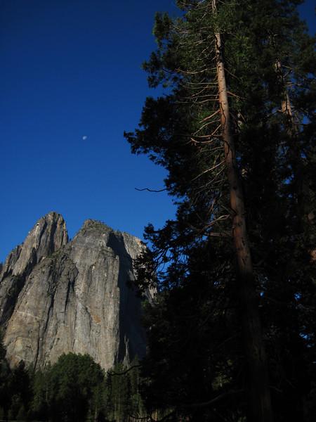 Cathedral Rocks, Moon, and Ponderosa Pine