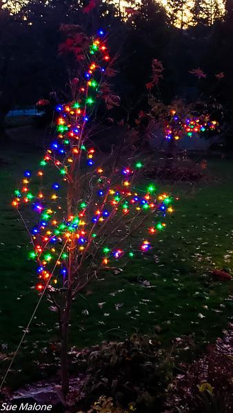 12-01-2020 Christmas Lights Up-9.jpg