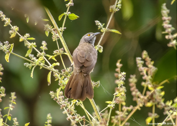 Birds in The Gambia 2016 - Set 4