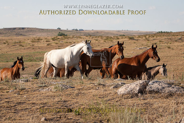 Ranch38-2356.jpg