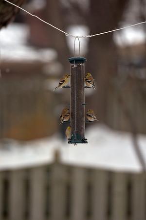 2013 12 15 birds