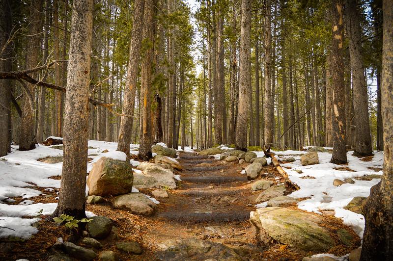 Bierstadt Lake Trail