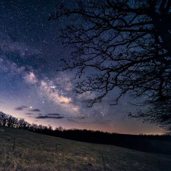 Branches under the stars #3