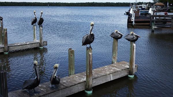 THE BIRDS OF FLORIDA