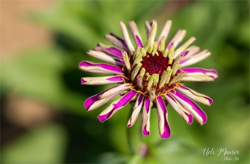 Blumen zum Selberschneiden - 2015-08-13- 0U5A1506.jpg