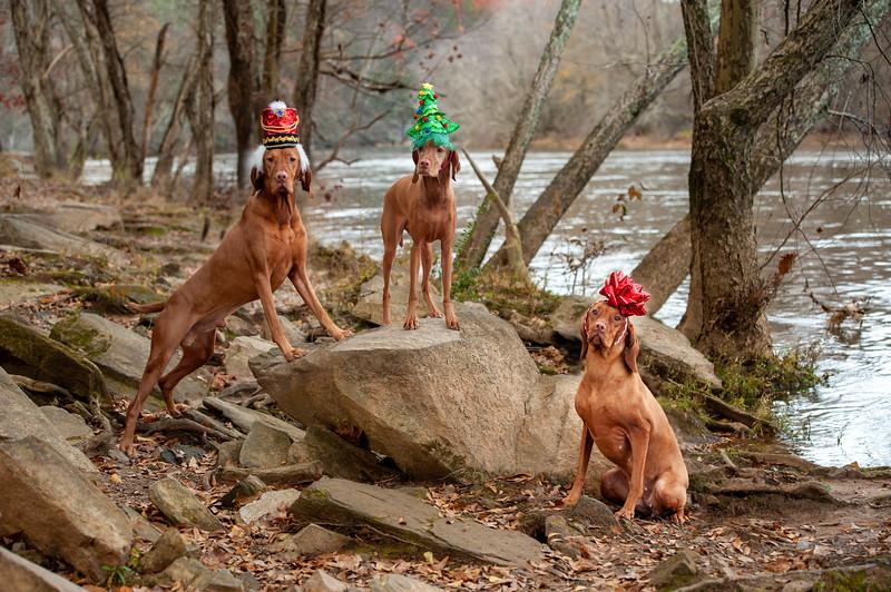 3 Dogs Rock.jpg
