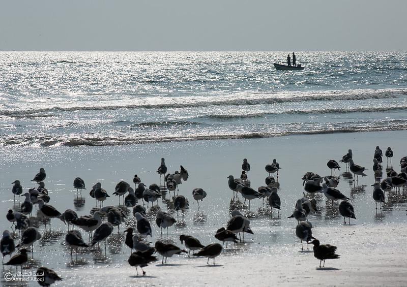 Sardine Season (20)- Dhofar.jpg
