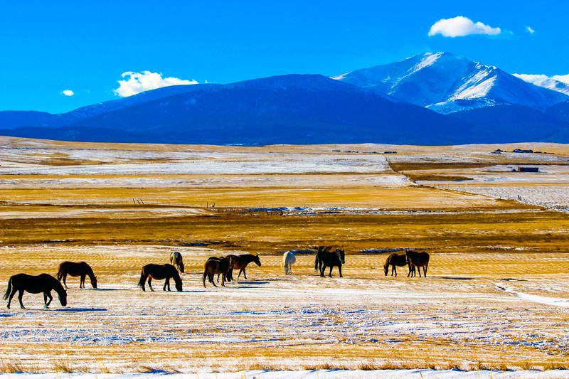 Animals-Horses-21.jpg