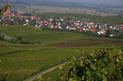 Affentaler Vineyards- Germany September 2007