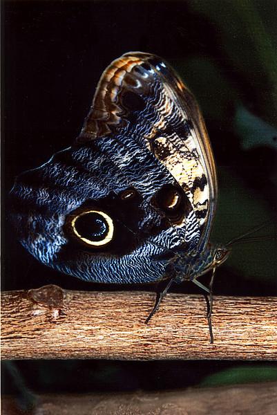 Butterfly on branch.jpg