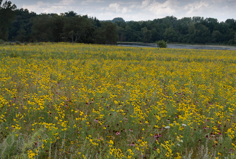 The Lakeville Road Prairie overlooking Lake Petite.