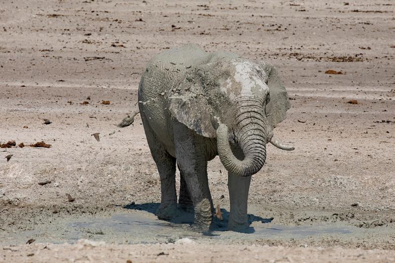 Namibia 69A8531.jpg