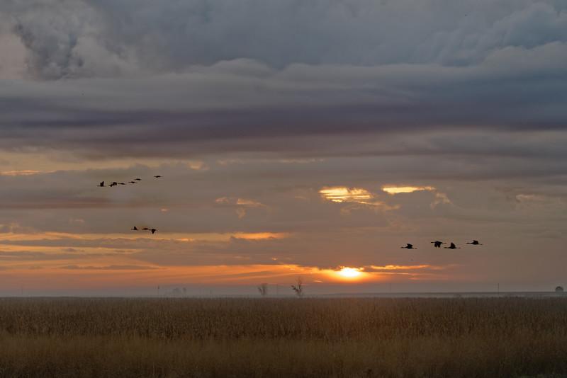 Merced National Wildlife Refuge 2020