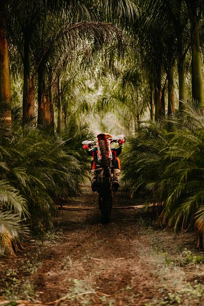 PalmsteadEdit-51.jpg