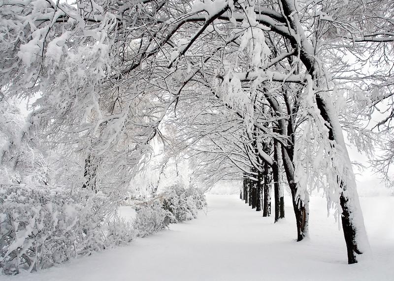 snowing--whiter30d-070405-6867-fullsize.jpg