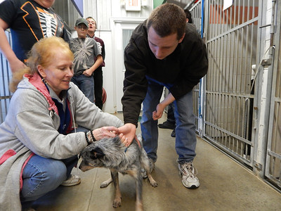 SDHS Special Education Helping Animal Shelter