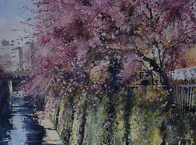 Gabrielle Moulding - Canal and Blossoms - Meguro River