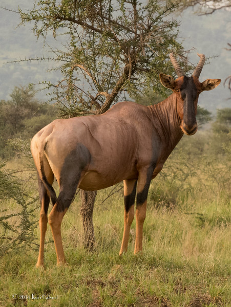 AntelopeK-2.jpg