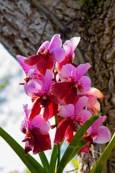 naples_botanical_garden_0050-LR.jpg