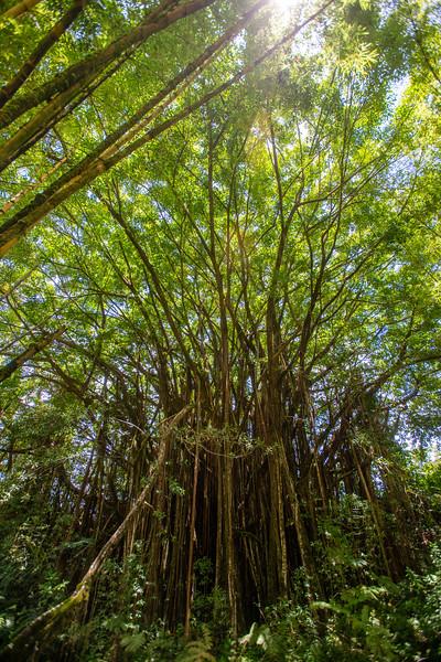 Hawaii2019-140.jpg