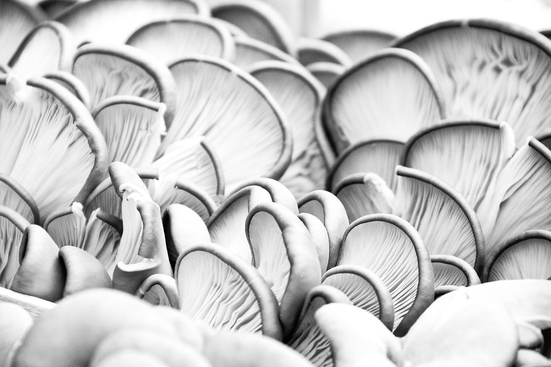 mushrooms bw.jpg