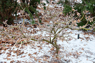 Winter Ice Storm at Gum Tree Farm