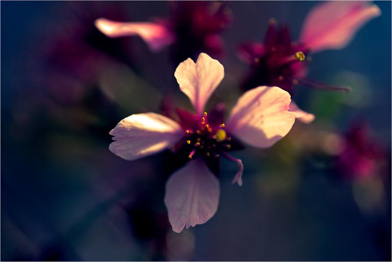 20120323_Hanami_06.png