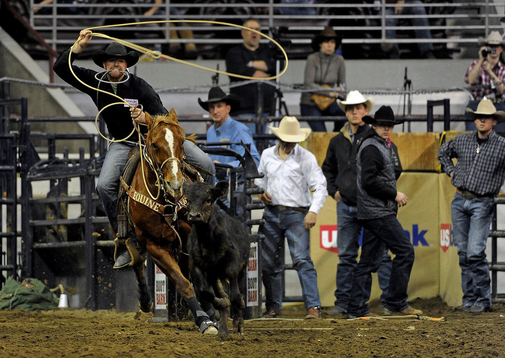 . DENVER, CO- JANUARY 27:   Jeremiah Peek of Pueblo, Colorado gets ready to rope a calf during the tie down roping event in the rodeo.  The final day of the 2013 National Western Stock show was Sunday, January 27th.  One of the big events for the day was the PRCA Pro Rodeo finals in the Coliseum.  The event featured bareback riding, steer wrestling, team roping, saddle bronc riding, tie down roping, barrel racing and bull riding.  (Photo By Helen H. Richardson/ The Denver Post)
