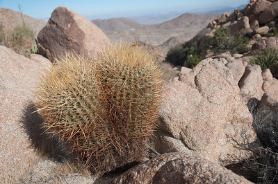 2014-02 Inkopah to Valley of the Moon (All Photos, Card 1)
