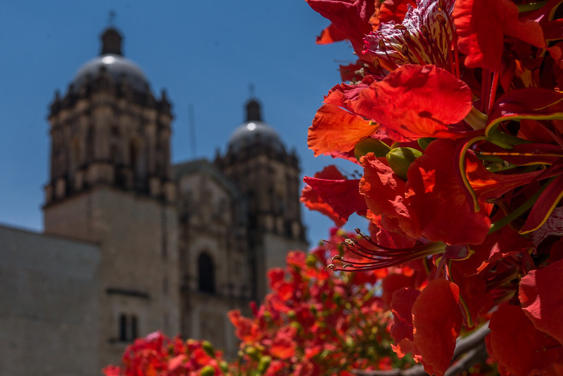 Oaxaca-Centro-8.jpg