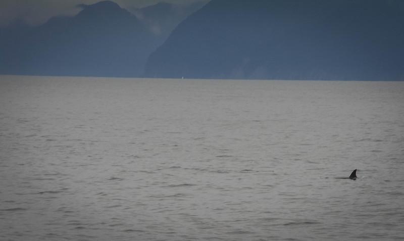 Kenai-Fjords-179.jpg