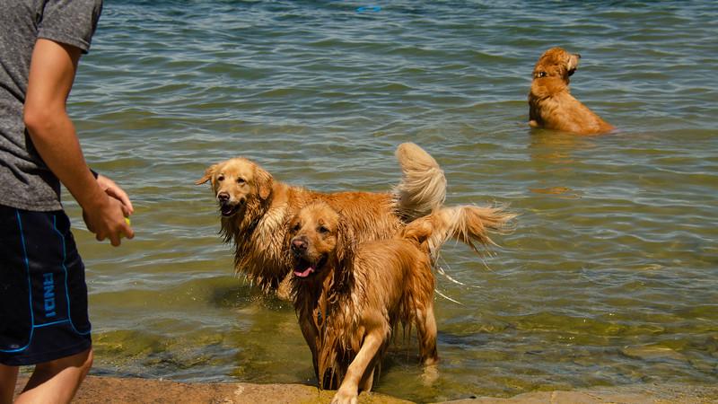 PuppyParty18-143.jpg