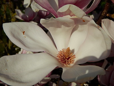 Blüten in Geisenbrunn