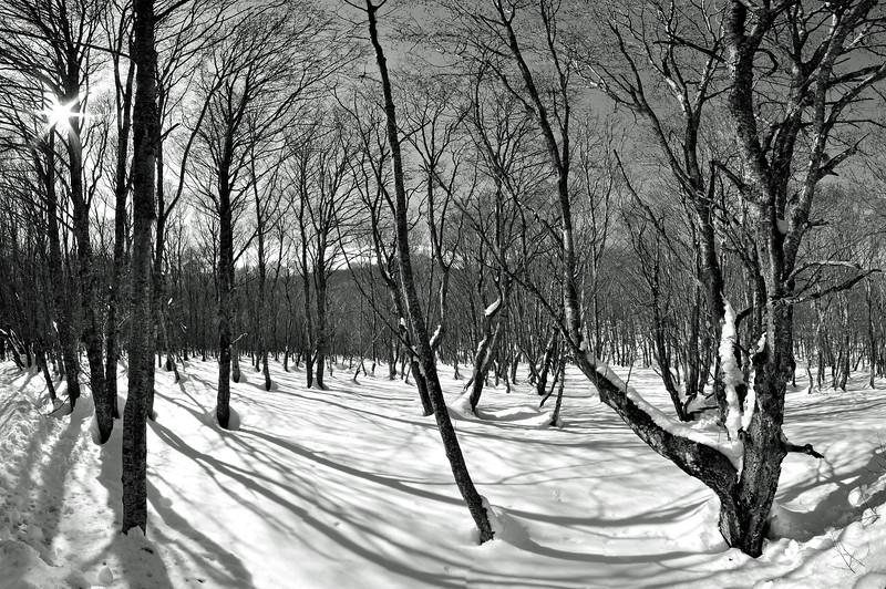 Dark Tired Trees - Febbio, Villa Minozzo, Reggio Emilia, Italy - March 14, 2010