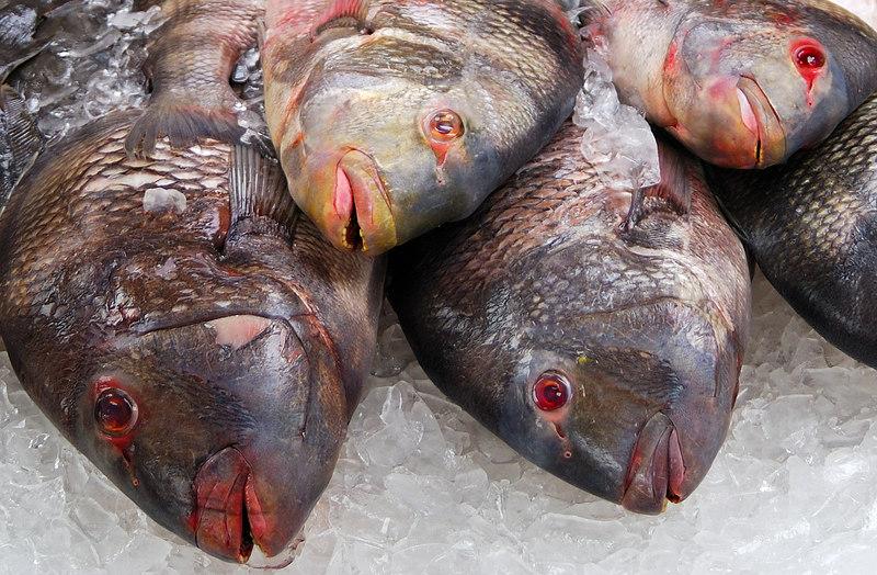 Fish1SM.jpg