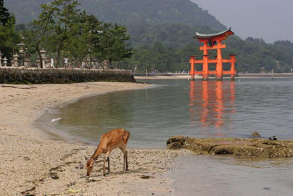 Japan - 2 - Kyoto, Hiroshima, Miyajima