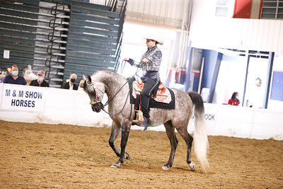 42.Arabian Western Pls Junior Horse