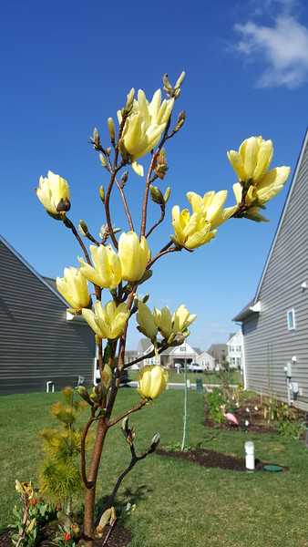 Spring Bloom 2018