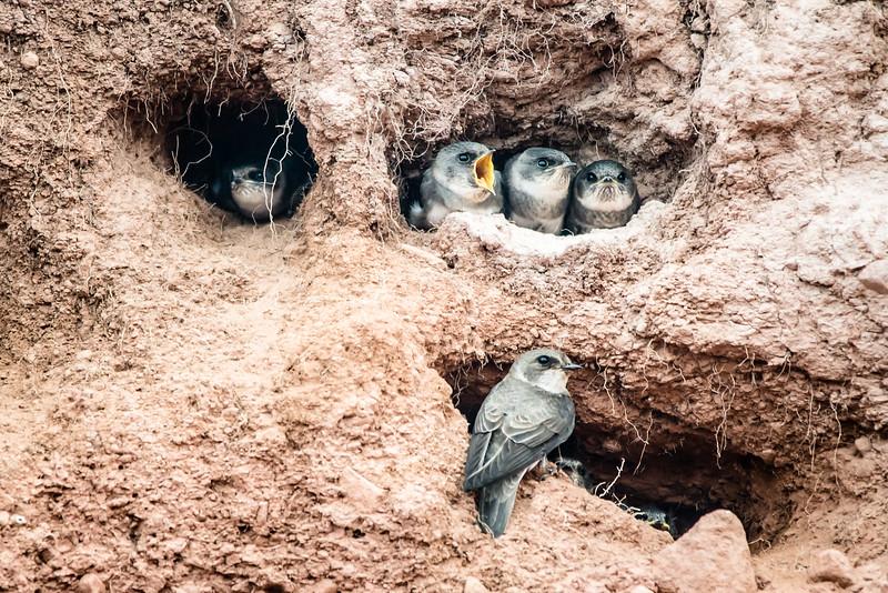 web squawky bird.jpg