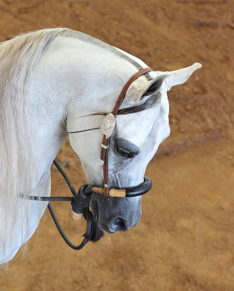 Arabian  AZ _20.jpg