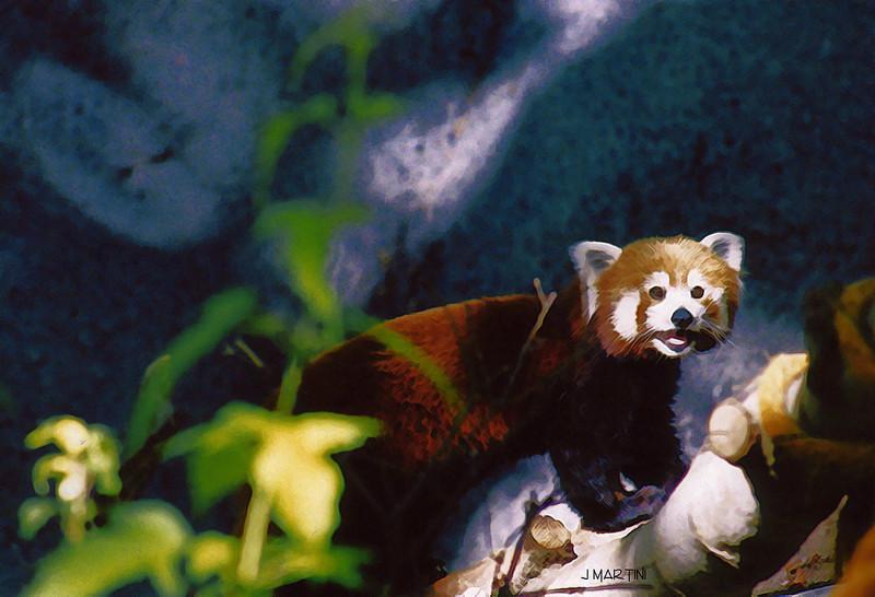 red panda 12-27-2007.jpg