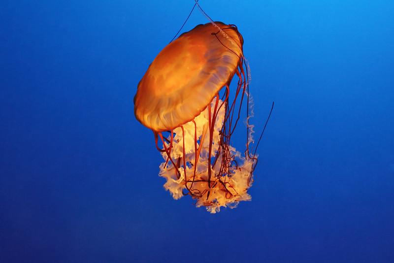 20070120_3920_InProgress_Aquarium_JellyFish.jpg