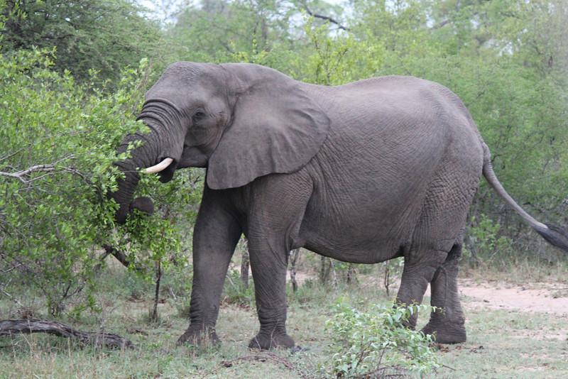 Africa Trip 2012 357.jpg