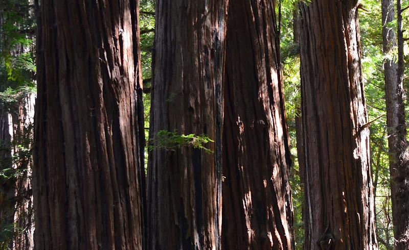 2013 Oct. Northern CA Terry's JPEG 3459 -  at.jpg