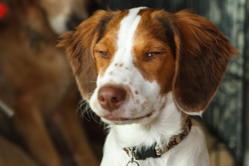 Suspicion dog is suspicious.