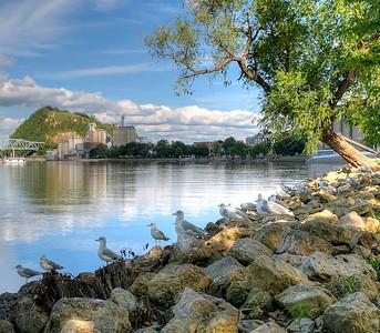 Bay Point Tree