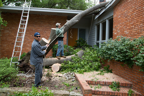 Home- Tree Removal