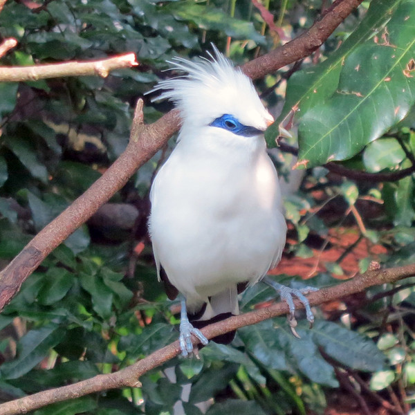 Hong Kong aviary 03.jpg