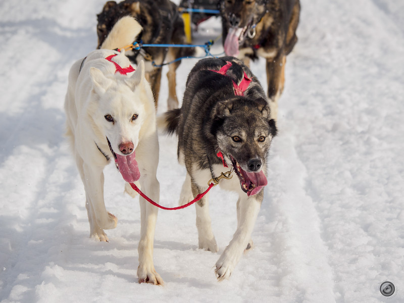 20190325_Blaire_and_Liz_Mushing_12.jpg