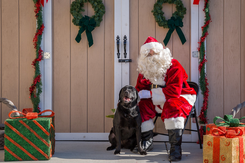 Pet Pictures With Santa-63.jpg